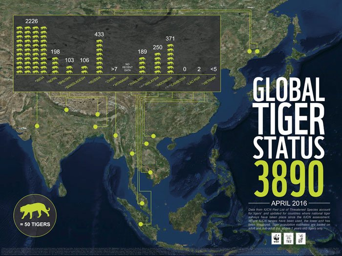 embargoed infographic  global tiger status   april 2016  high resolution  1