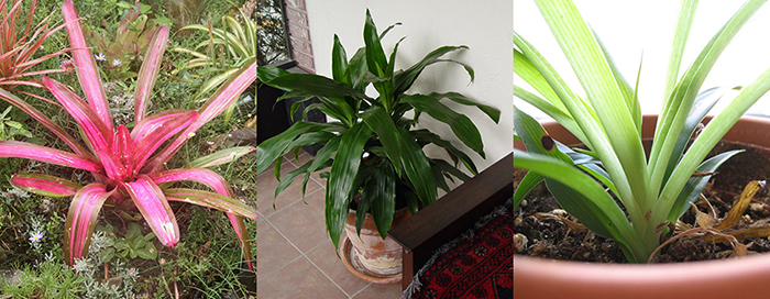 These are the best houseplants to improve indoor air quality