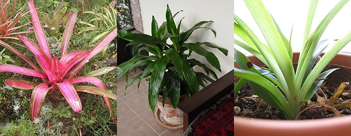 houseplants-2