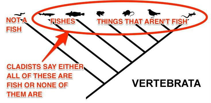 vertebrates-cladogram-fish-skitch