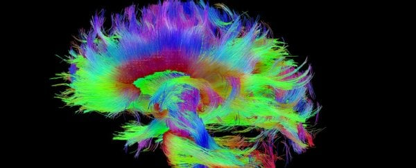 Harvard scientists think they've pinpointed the physical source of consciousness
