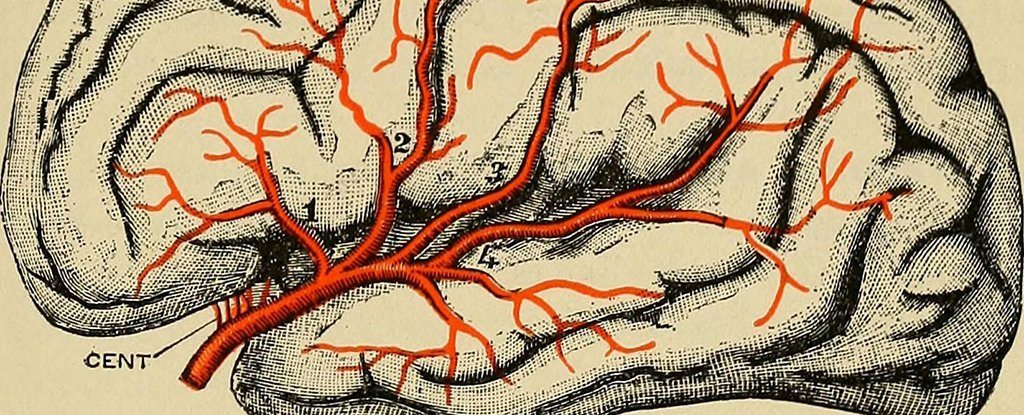 There's Mounting Evidence That Parkinson's Starts in The Gut - Not The Brain