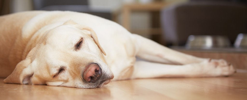 Why Are You Always Tired, Even Though You Get Enough Sleep? Science Has Some Answers