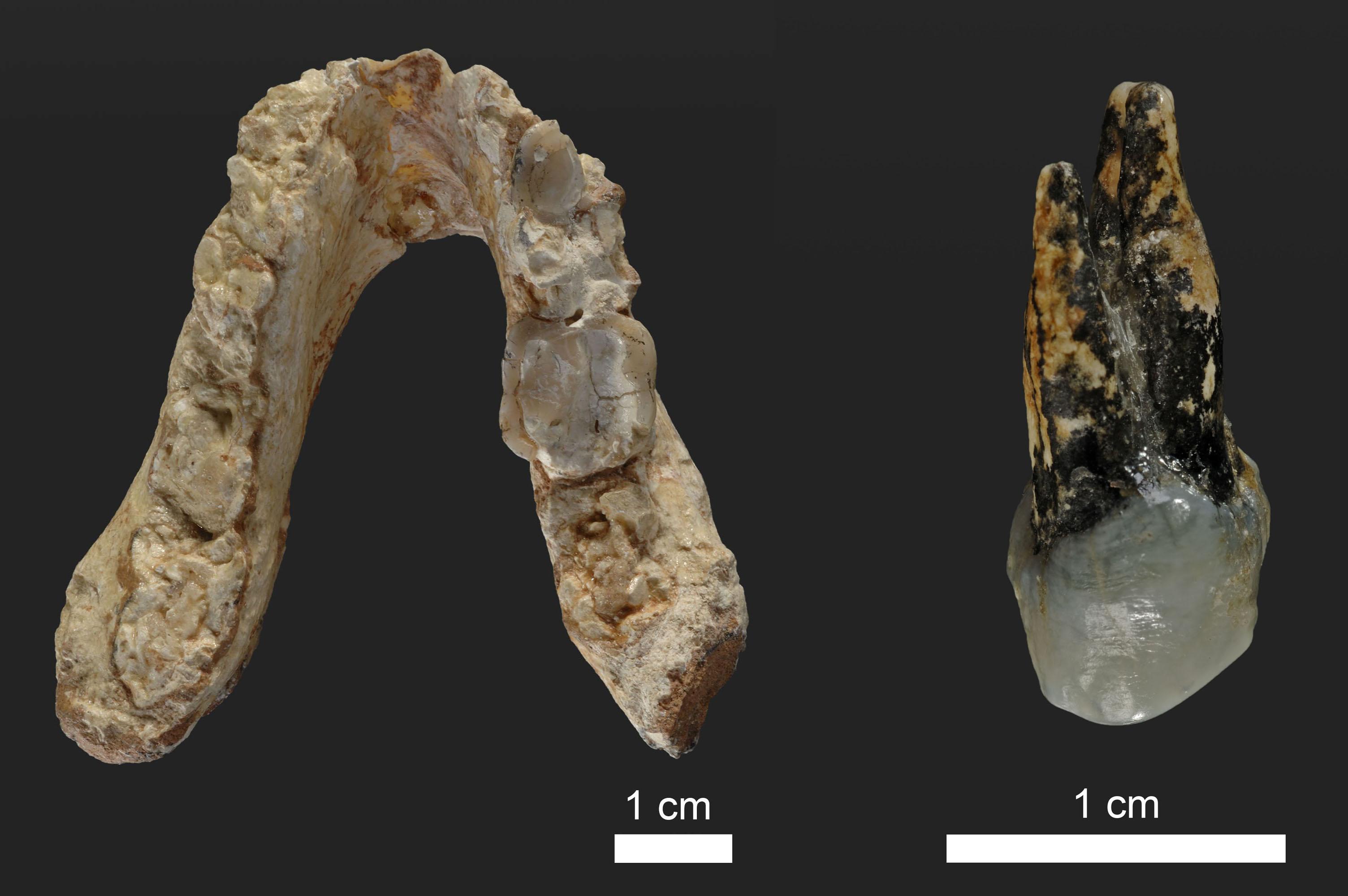 graecopithetucus fossils plos one