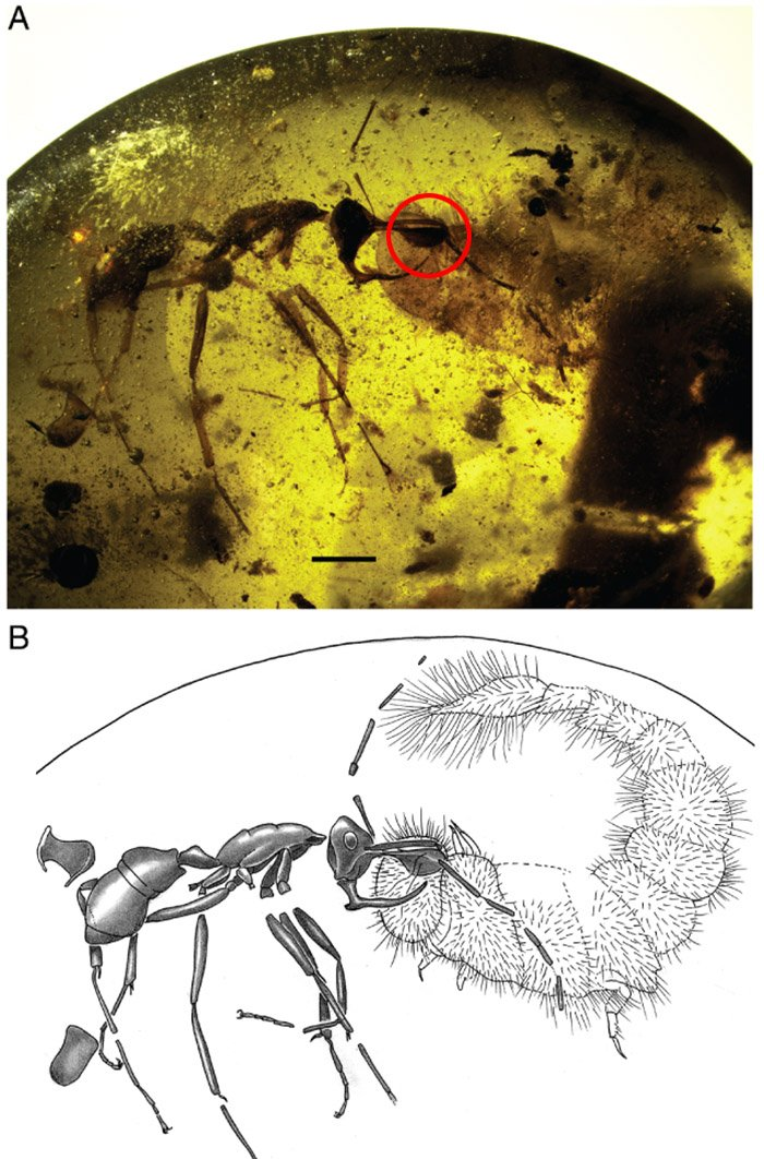hell ant with jaws and beetle larva annotated
