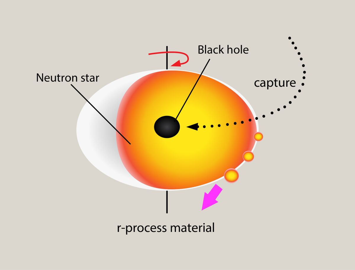 neutron star and primordial black hole