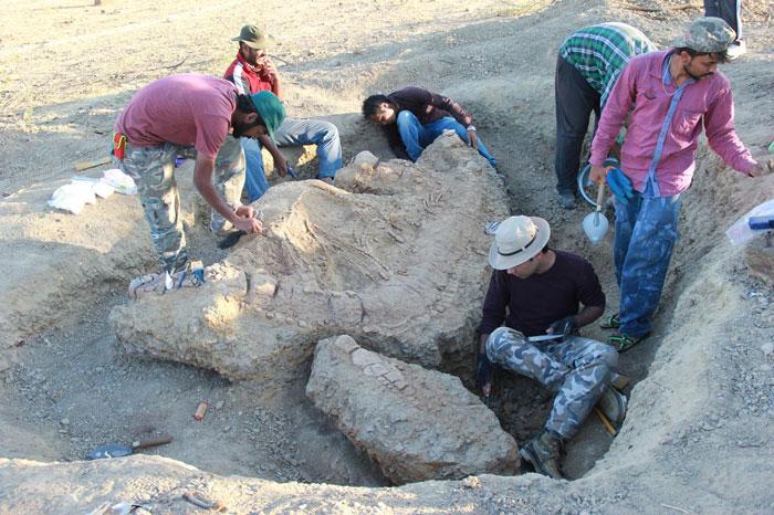 835 ichthyosaur india 2
