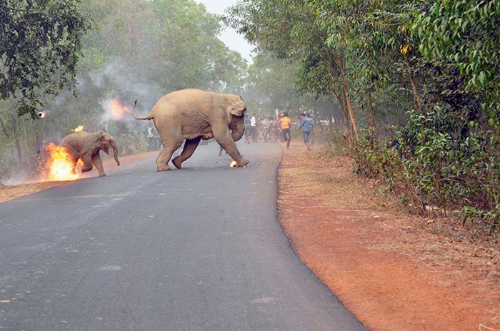 elephants india fire award photo