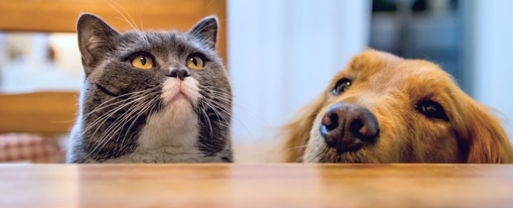 When It Comes to Dog vs Cat Brains, Science Might Have Found a Clear Winner