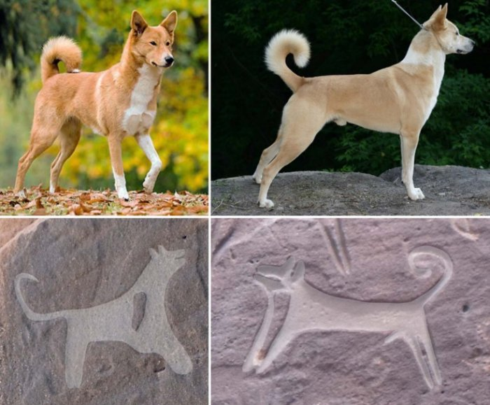 rock art dogs canaan