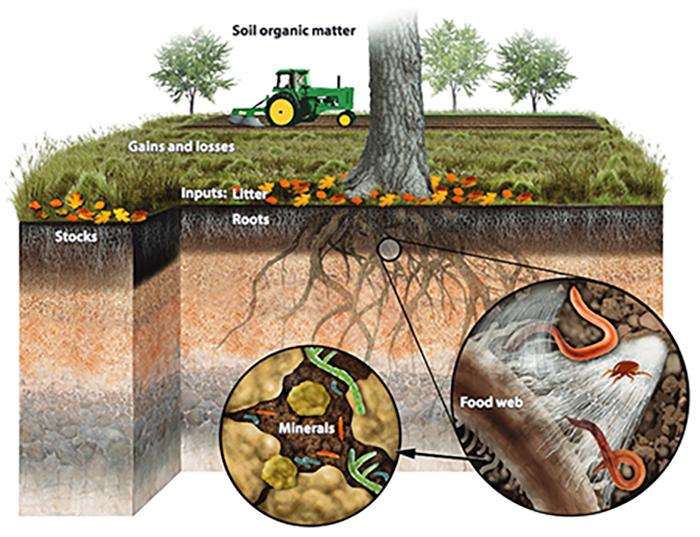 soil carbon 2
