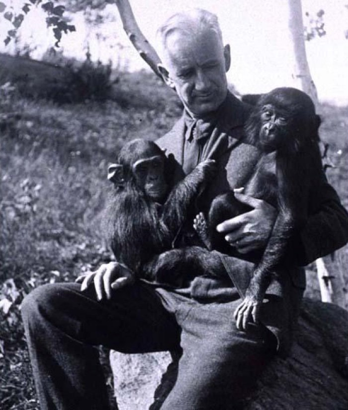 722 oliver humanzee simpanse hibrida 2