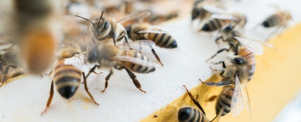 Two boys in Iowa have been charged with killing half a million honeybees