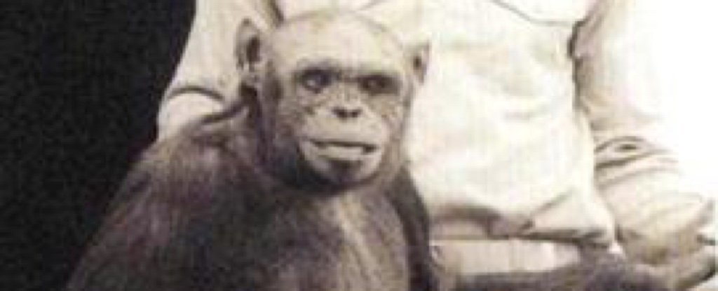 Scientist Claims US Lab Engineered 'Humanzee' Human-Chimp