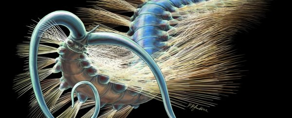 This bizarre fossil worm from 508 million years ago has scientists excited
