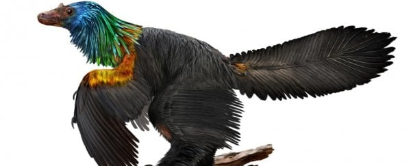 Stunning fossil discovery reveals a new dinosaur with iridescent feathers
