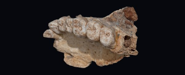 A human fossil has just been confirmed as the oldest found outside of Africa