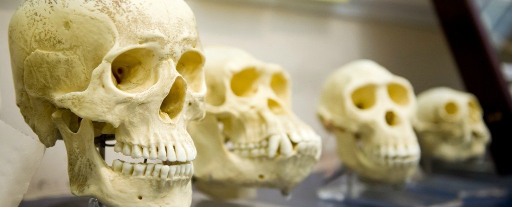 Modern Human Brains Have Only Been Around For a Surprisingly Short Time