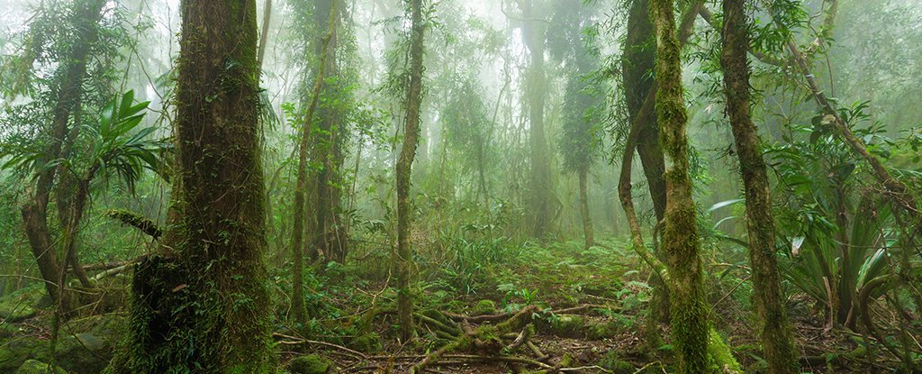 New Study Shows Just How Close The Amazon Rainforest Is to ...