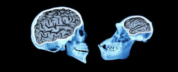 New study reveals how our brains evolved to be so amazingly huge