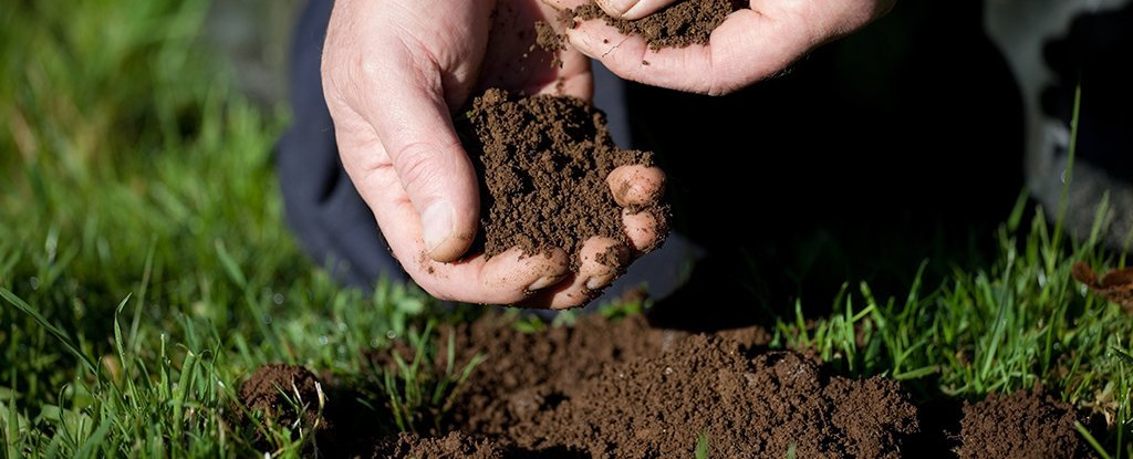 Scientists Just Found a Super-Powerful New Class of Antibiotics in Dirt