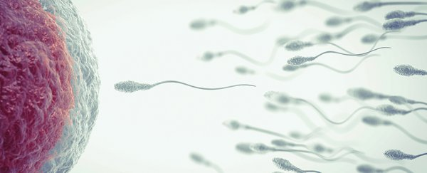 Scientists just discovered a never-before-seen structure in human sperm