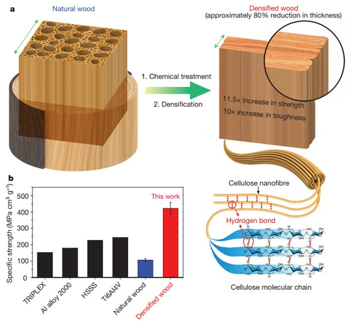 scientists have developed a way to make wood as strong as steel