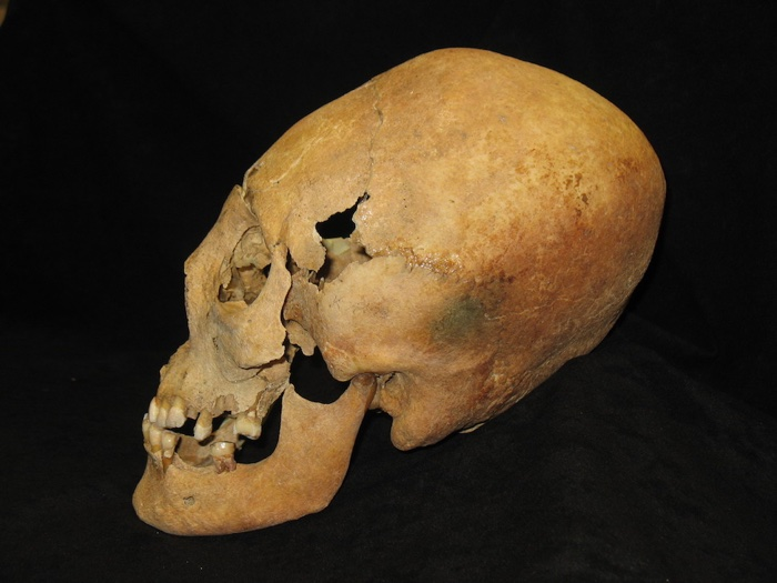 627 elongated skulls bavaria 2