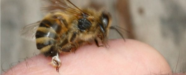 A woman has died after getting 'acupuncture' from live bee stings