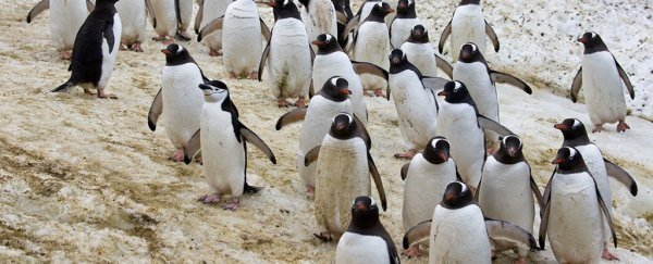 This 'selfie video' taken by Antarctic penguins is the best thing we've seen all day