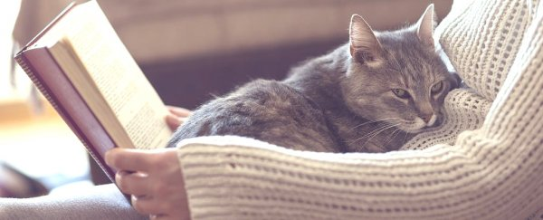 Here\u0027s Why Cats Knead You With Their Paws, According to Science