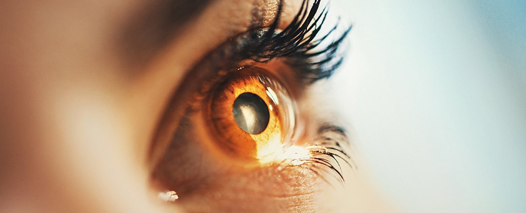 https://www.sciencealert.com/images/2018-03/processed/macular_degeneration_stem_cells_1024.jpg