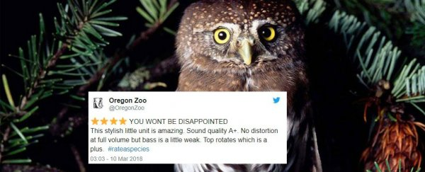 Zoos are leaving animals delightful Amazon-style reviews and it's too much for our hearts