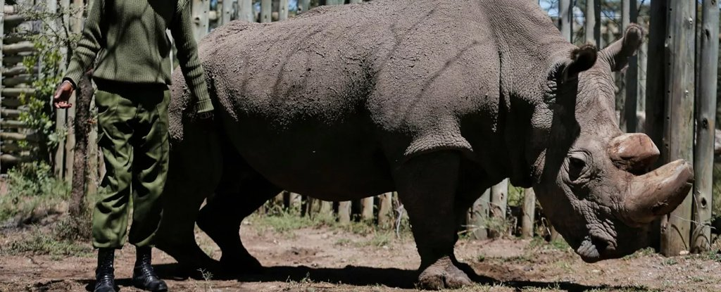 A college student has 3d printed his own braces for less than 60 the last male northern white rhino in the world just died solutioingenieria Image collections