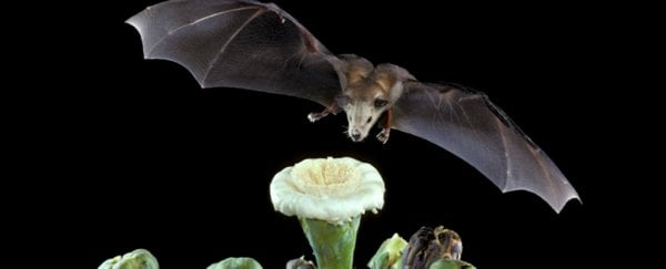This bat is the first to make it off the endangered species list