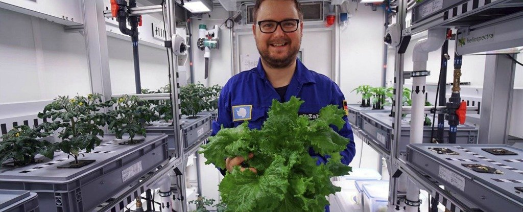 Scientists Just Grew a Whole Salad in Antarctica, Without Any Daylight or Soil