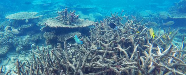 The Great Barrier Reef has been forever damaged due to massive coral deaths, study shows