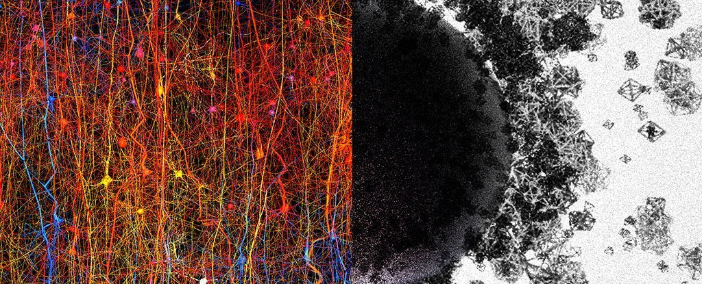 Scientists Find Evidence The Human Brain Can Create Structures in Up to 11 Dimensions