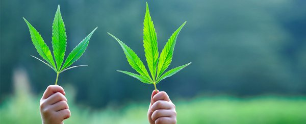 Quiz: How much do you know about the science of marijuana?