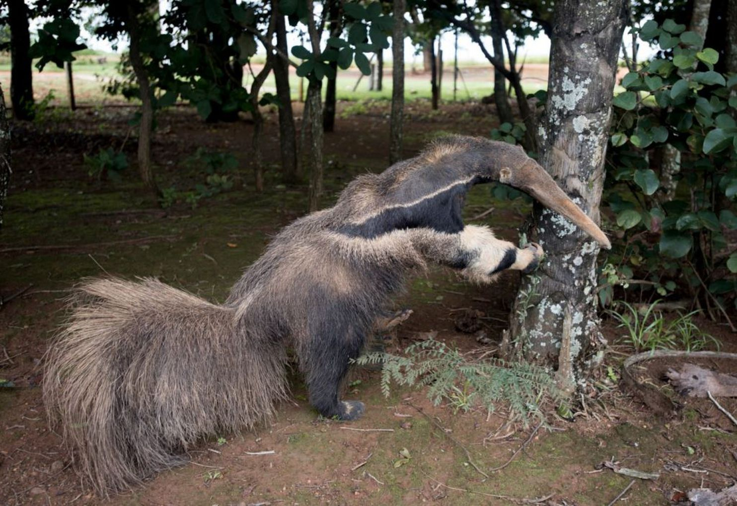 <div>There's Something Very Wrong With This Award-Winning Anteater Photo</div>