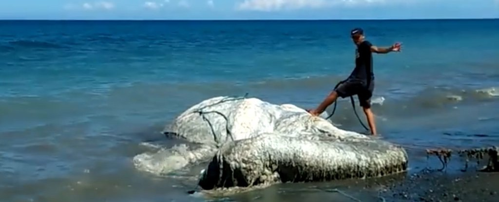 Massive Hairy Globster Has Washed Ashore In The Philippines And Nobody Knows What It Is