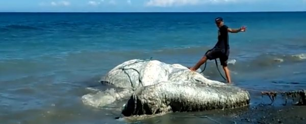 Massive, hairy 'globster' has washed ashore in the Philippines, and nobody knows what it is