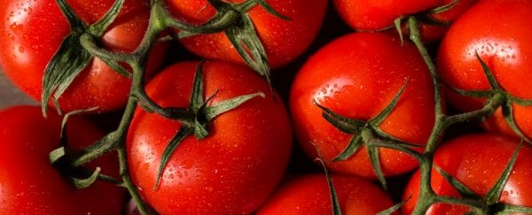 here s why a tomato is actually both a fruit and vegetable