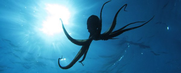An insane paper tests the limits of science by claiming octopuses came from space