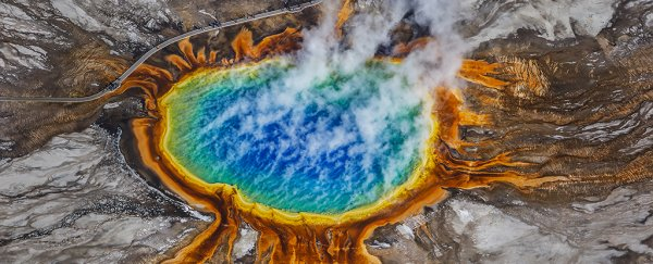A new Yellowstone Park discovery points back to the origins of life