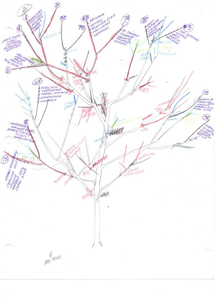 Tree of 40 Fruit tree 071 diagram