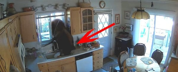 A bear broke into a home to look for candy, and it wasn't even the first time