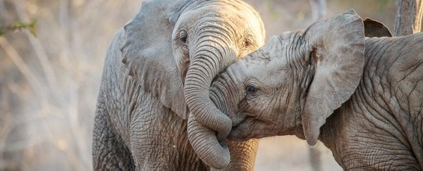 there s a surprising similarity between how animals and humans talk