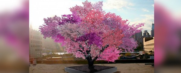 This magical tree produces 40 different types of fruit