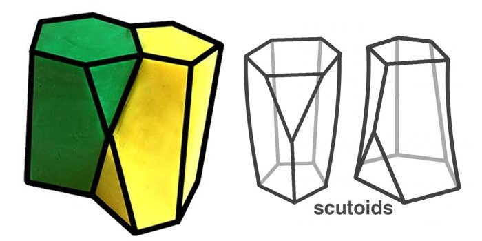 737 shape cell skin scutoid 2